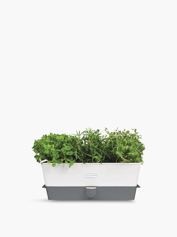Self Watering Herb Keeper Triple