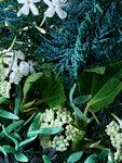 Coastal Cypress & Sea Fennel Eau de Toilette 100 ml