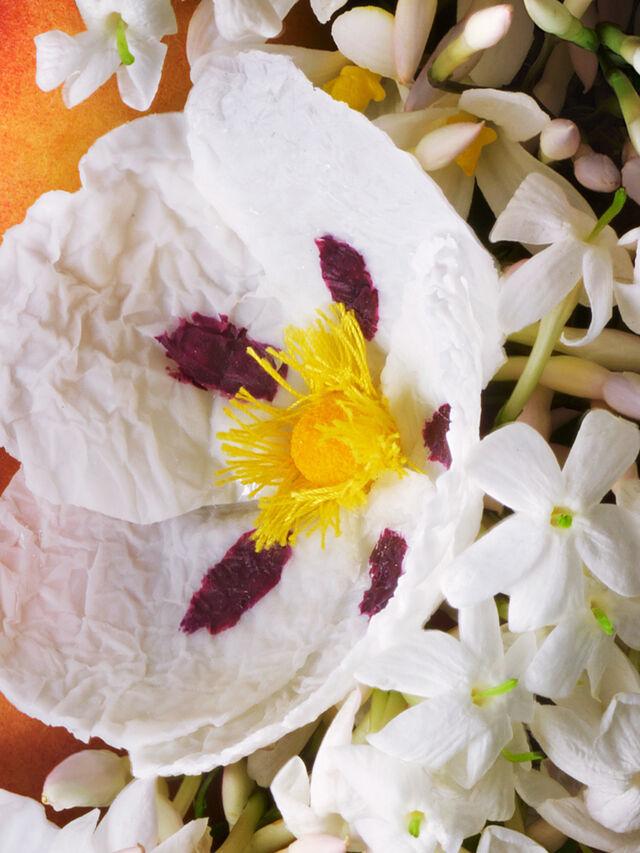 Jasmine & Sun Rose Eau de Toilette 100 ml