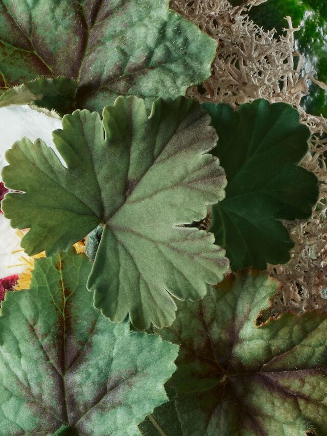 Geranium Nefertum Body Lotion