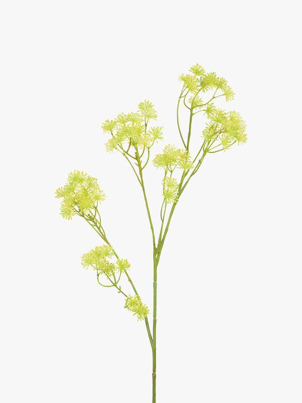 Aralia Flower Spray