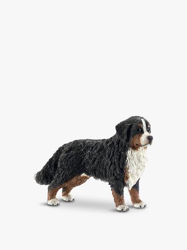 Bernese Mountain Dog Female