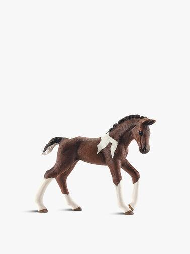 Trakehner Foal
