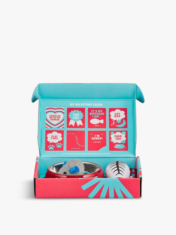 New Cat Starter Kit