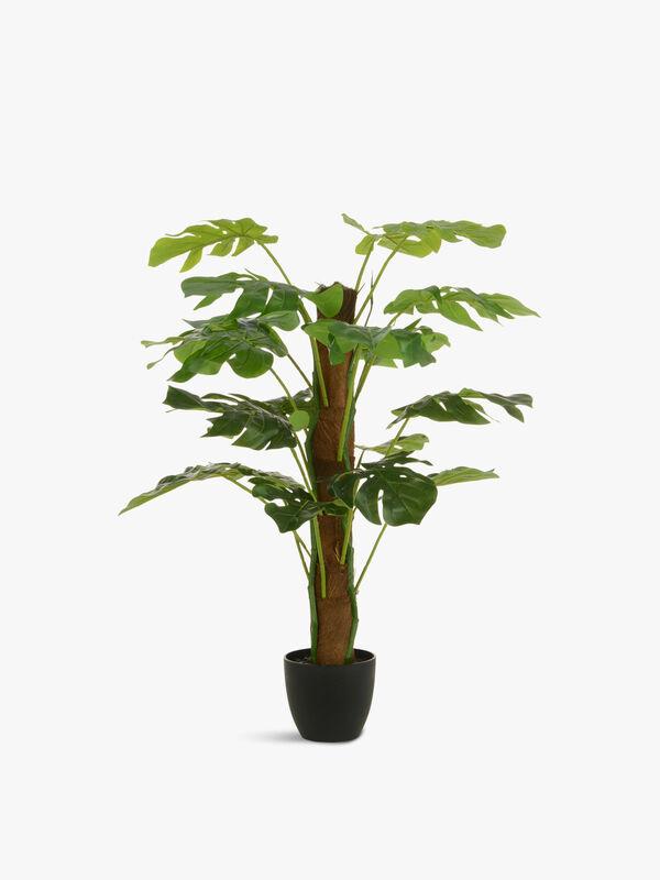 Split Philo Tree Pot