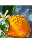 Aqua Allegoria Orange Soleia Eau de Toilette 75ml