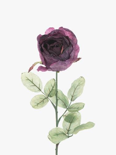 Antique Rose Stem