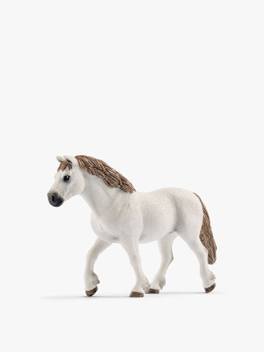 Welsh Pony Mare