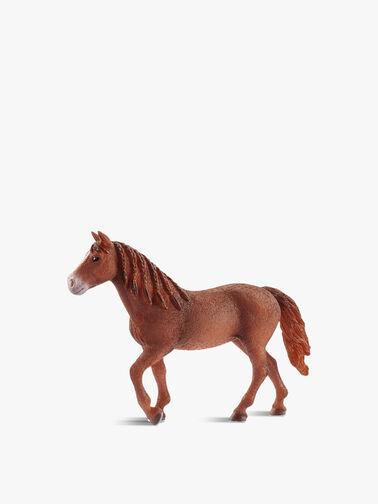 Morgan Horse Mare