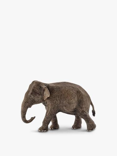 Asian Elephant Female